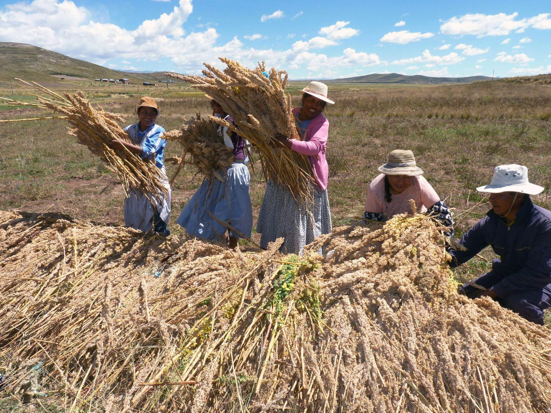 LIMA, PERU - FEBRERO- 20-  Productores Agropecuarios de Quinua en Puno   Foto: Andina/ Juan Carlos Chávez