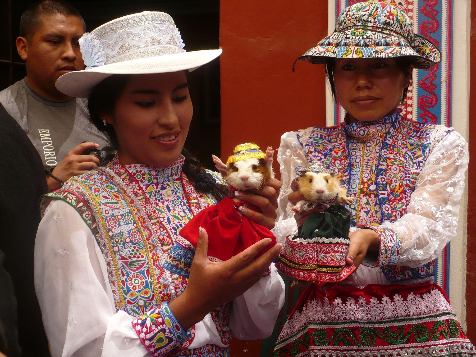 Arequipa impulsará exportación de cuyes como mascotas