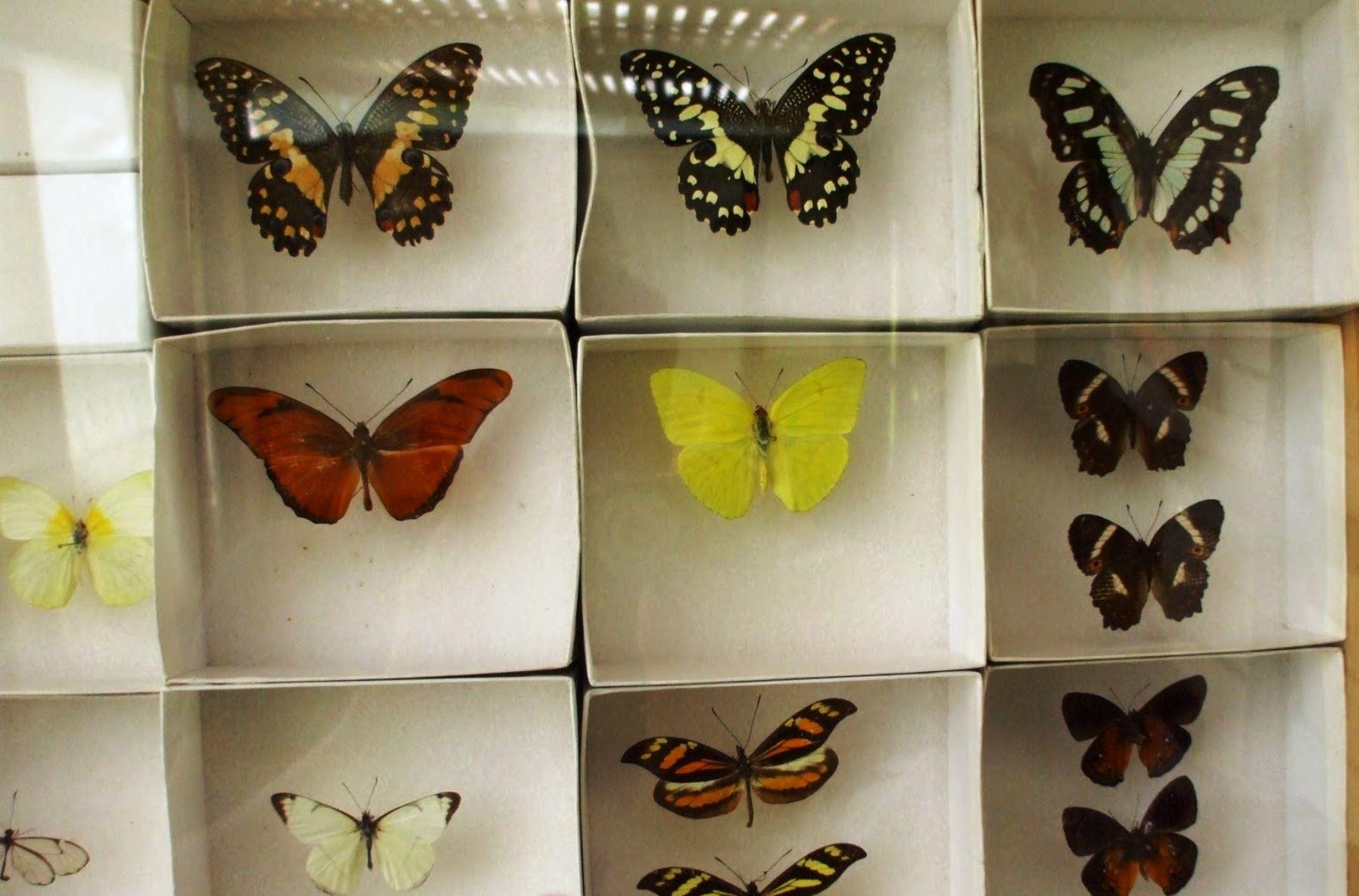 Прикол засушенной бабочки 7 букв