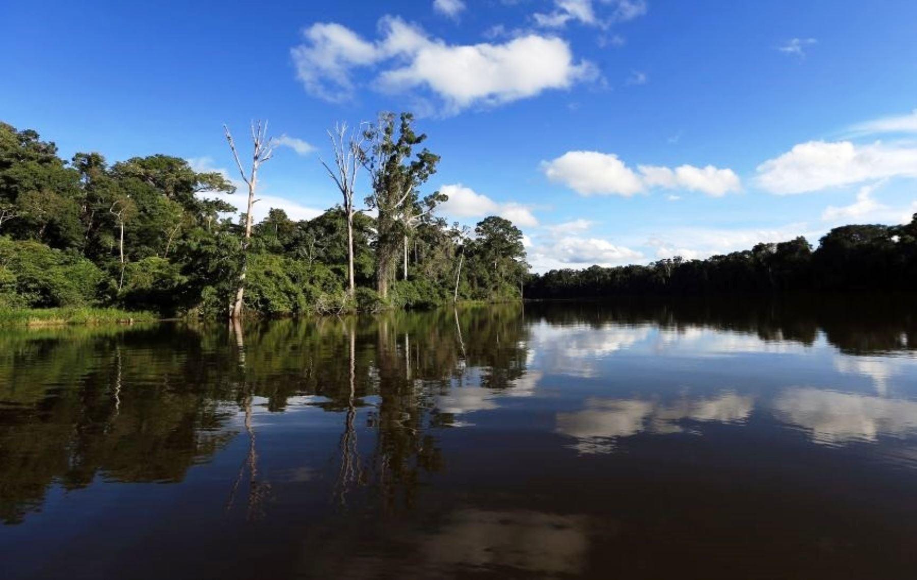 Parque Nacional del Manu. Foto: ANDINA/Difusión.