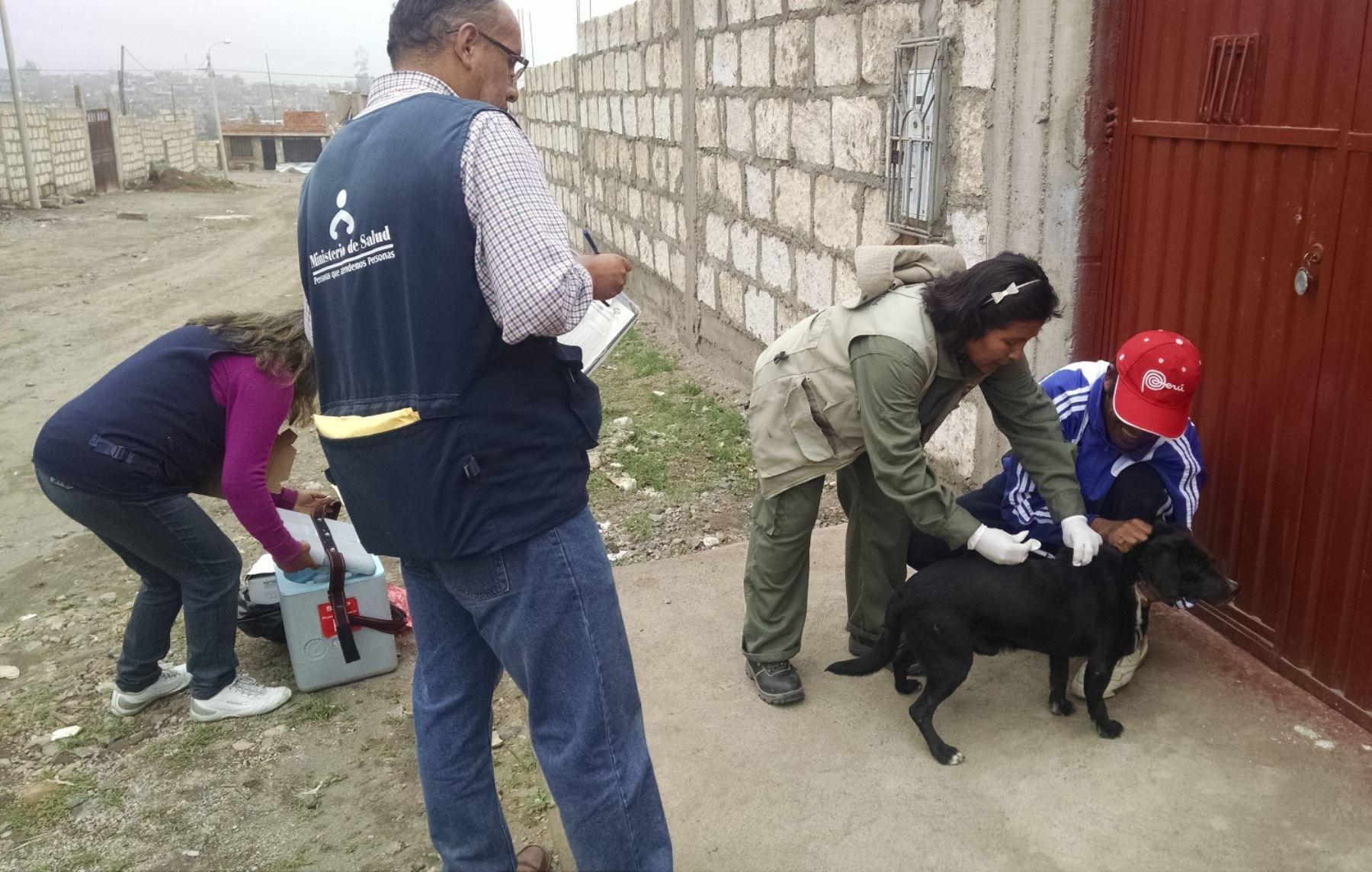 Reportan 15 casos positivos de rabia canina en Arequipa.Foto:  ANDINA/Difusión.