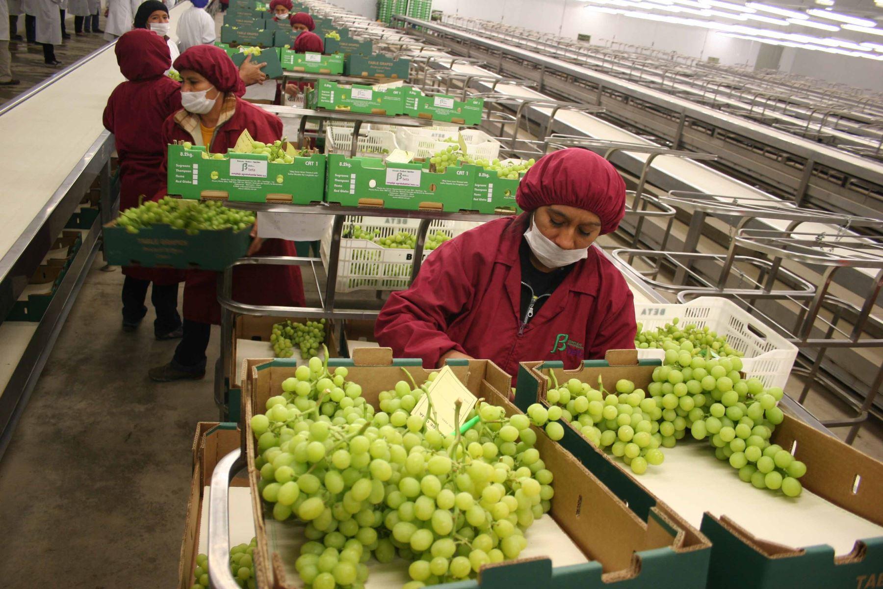Exportación de uva peruana.Foto:  ANDINA.