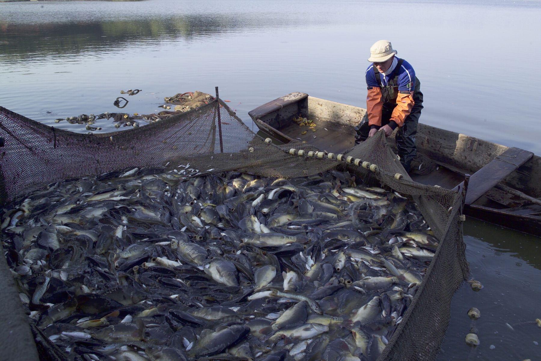 Pescadores artesanales. FOTO: ANDINA/Archivo