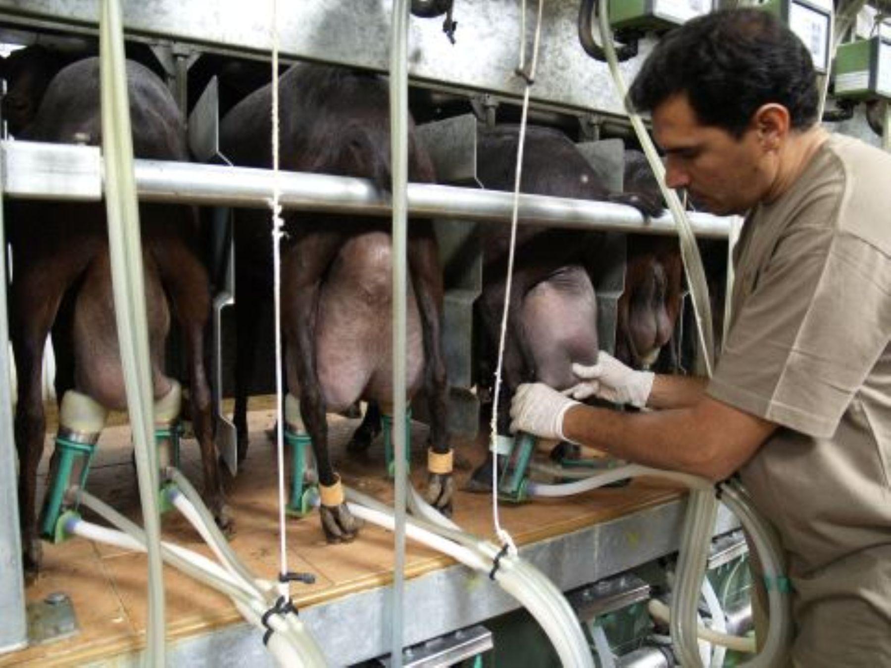 Proceso industrial de leche y productos lácteos. INTERNET/ Medios