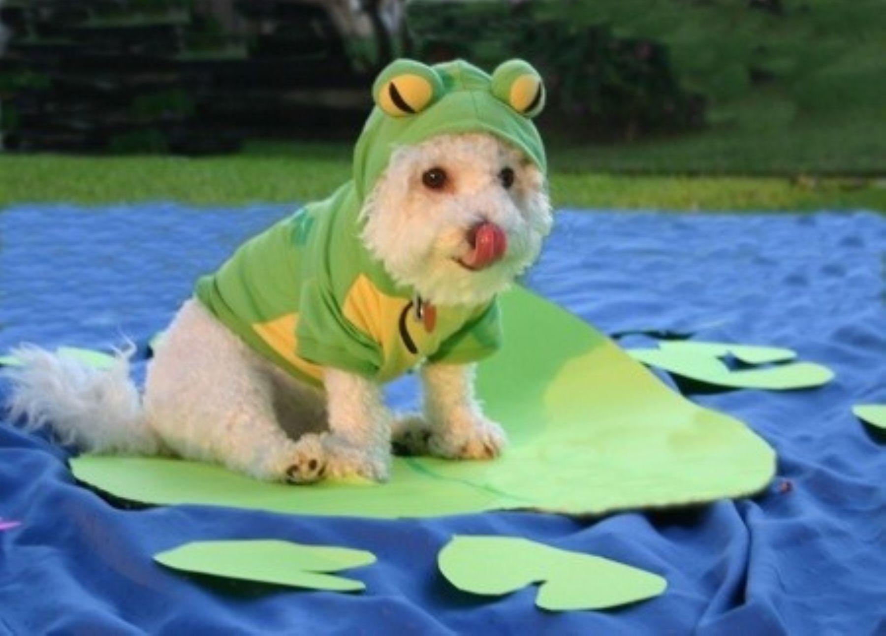 Municipalidad de Jesús María organiza concuros de disfraces para mascotas.