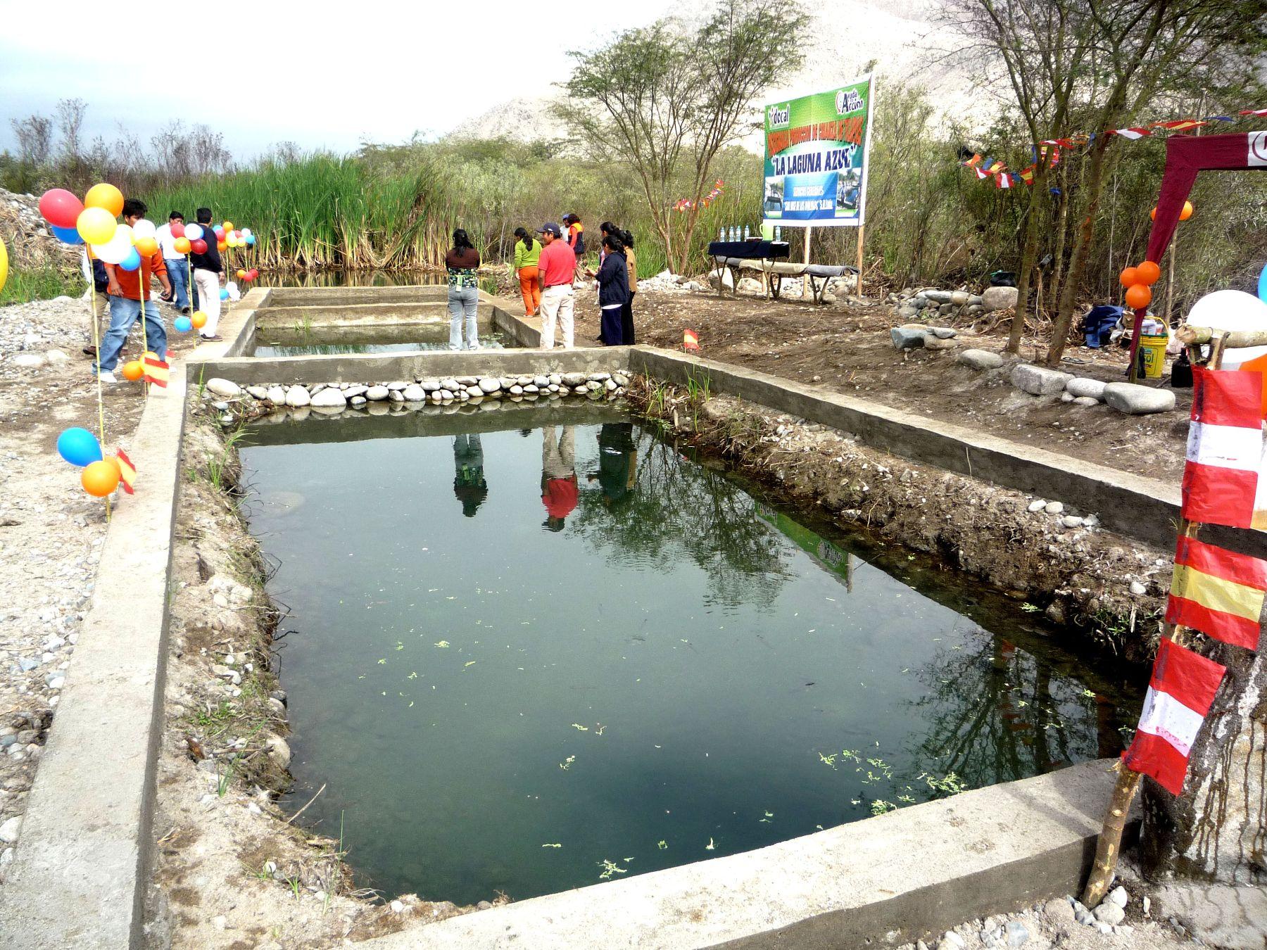 Damnificados de terremoto en ica instalan piscigranja de for Estanques para mojarra tilapia