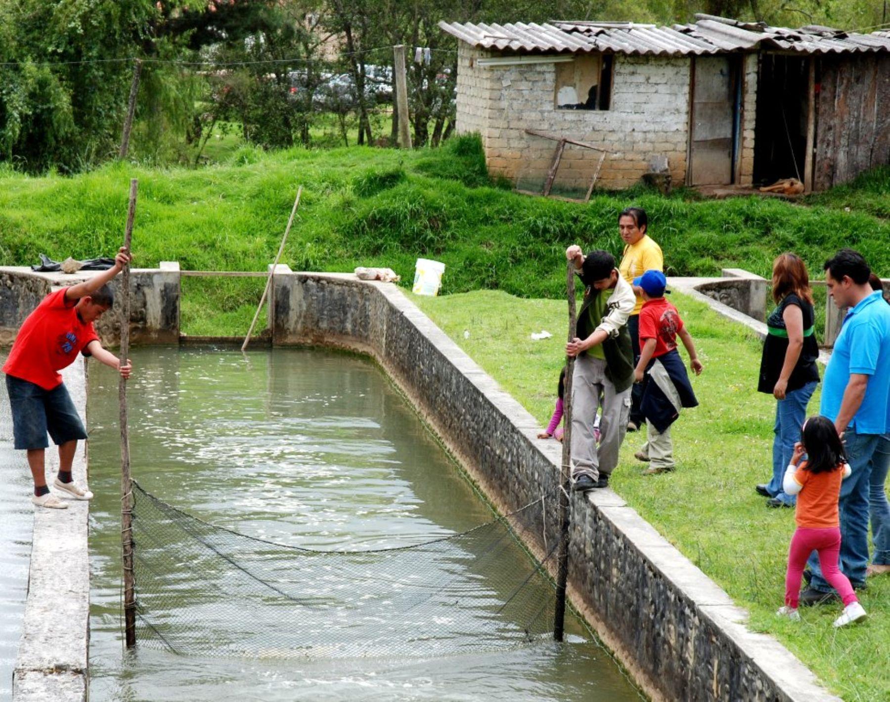 Cosecha de acuicultura crece en per y producci n podr a for Crianza de truchas en estanques
