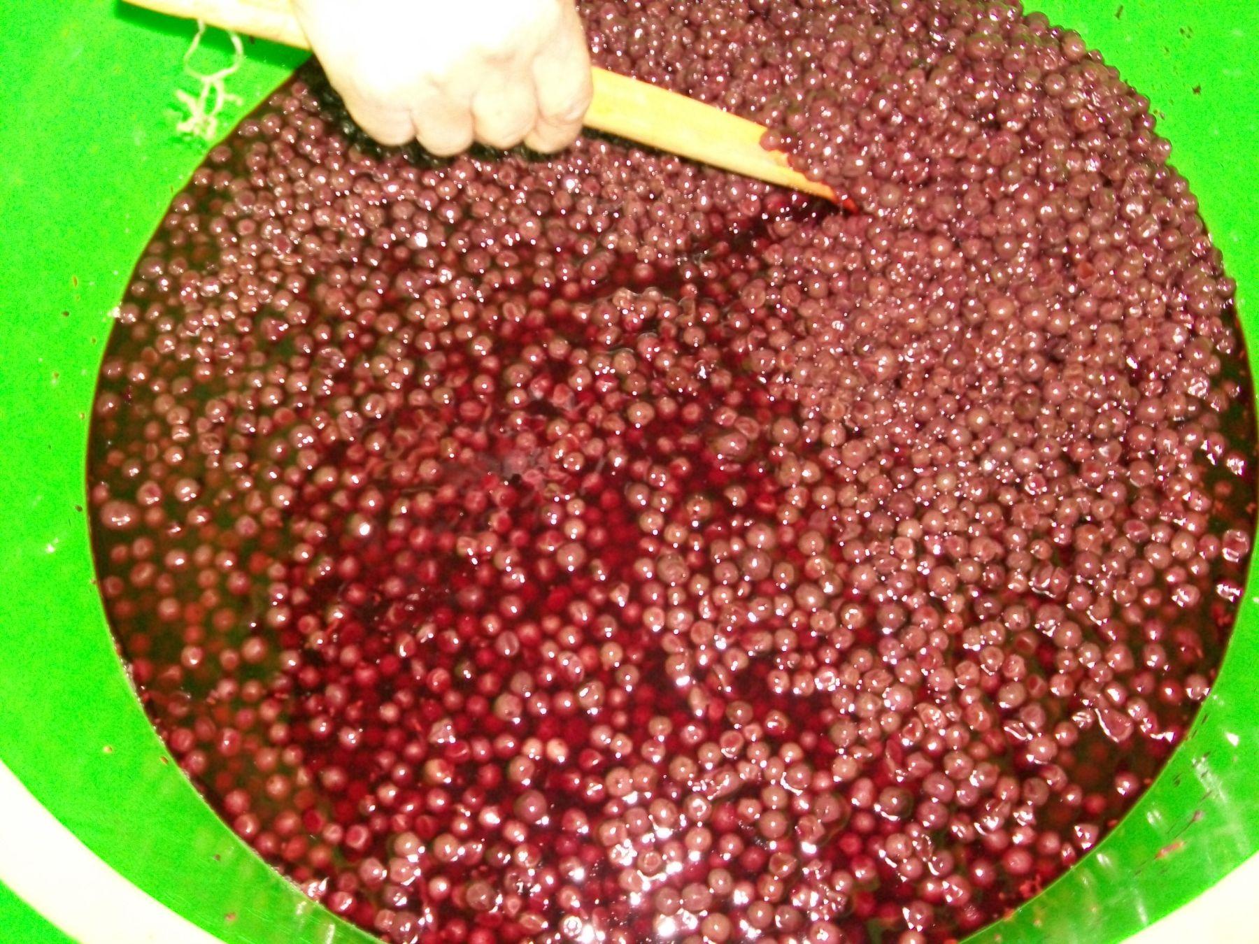 Preparación de vino de saúco. Foto: Programa Juntos.
