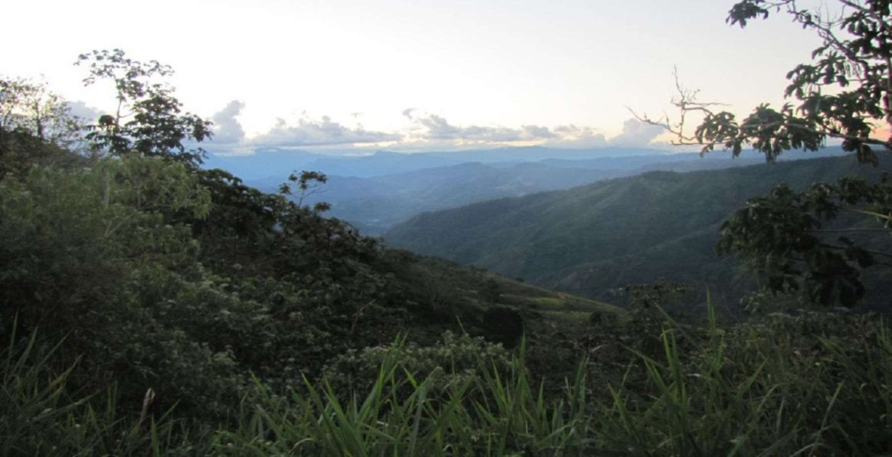 Bosque de protección Pui Pui, en Junín. Foto: Sernanp.