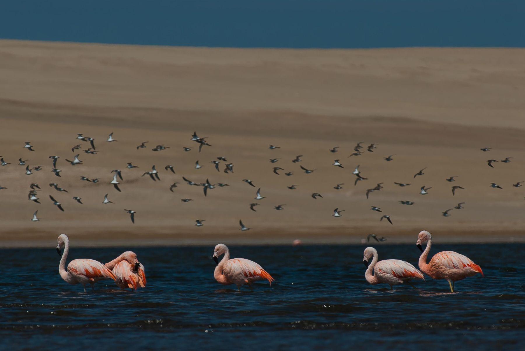 Reserva nacional Paracas, en Pisco (Ica). Foto: Christian Quispe / Sernanp.