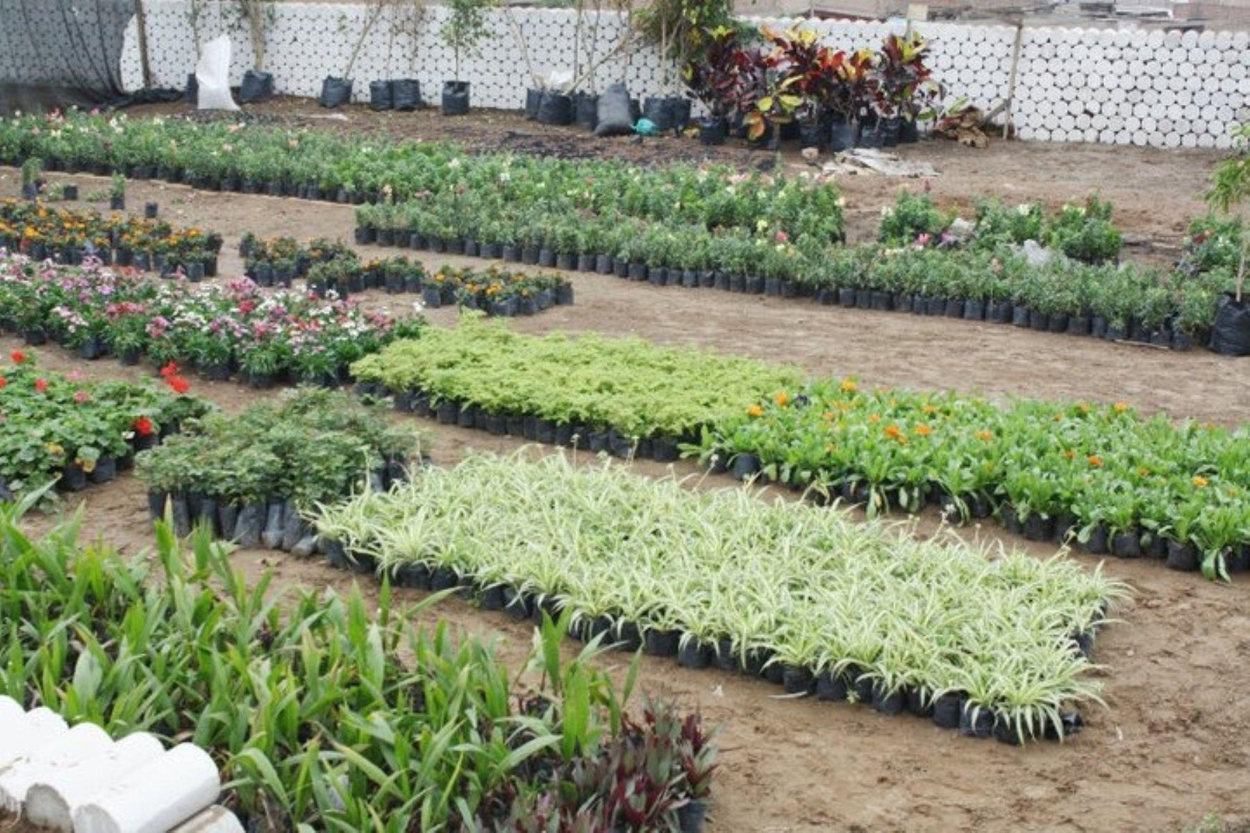 vivero m s grande de lima sur abri sus puertas al p blico ForViveros De Plantas En Lima