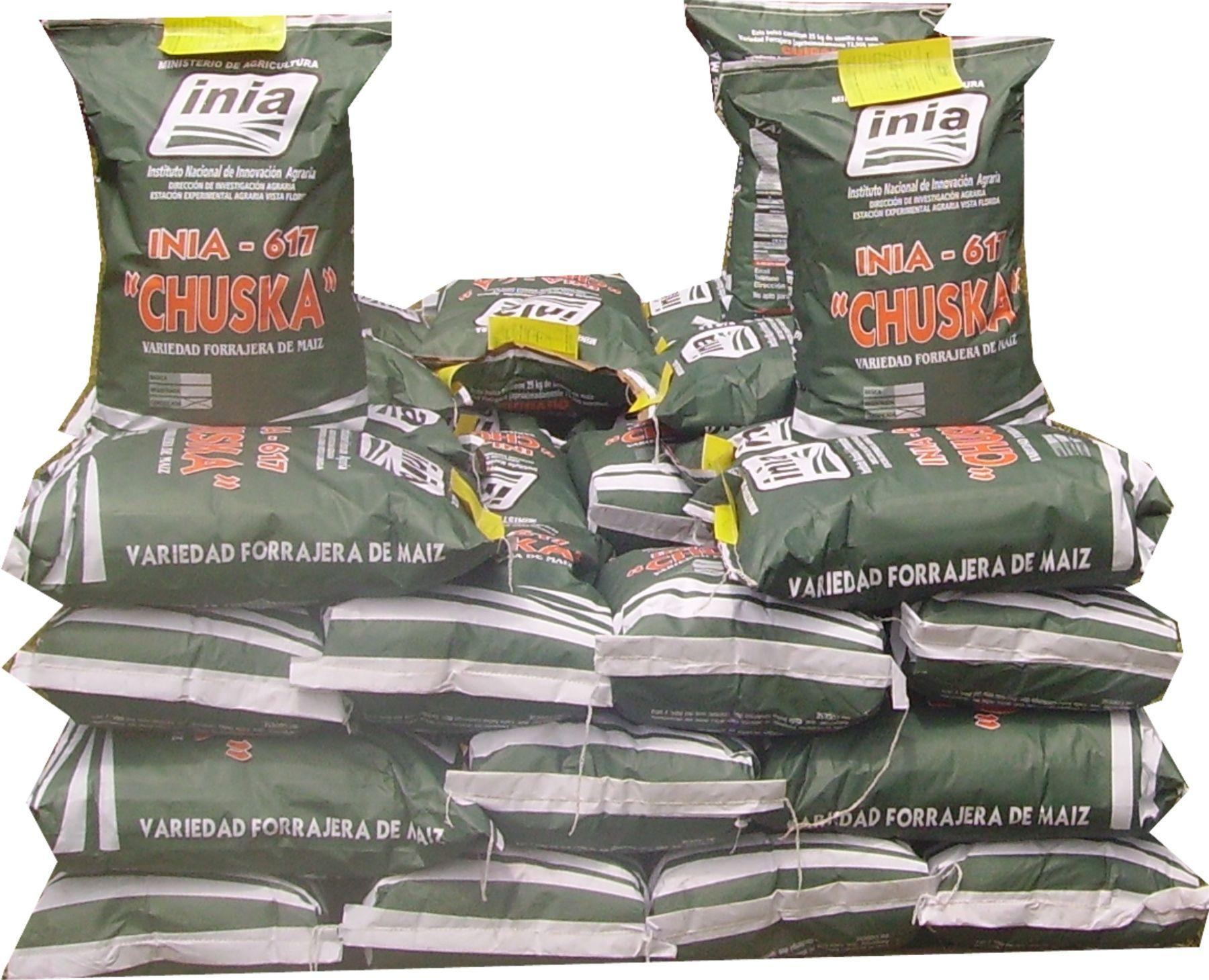 INIA pone a la venta nueva semilla de maíz amarillo duro INIA 617 - Chuska.