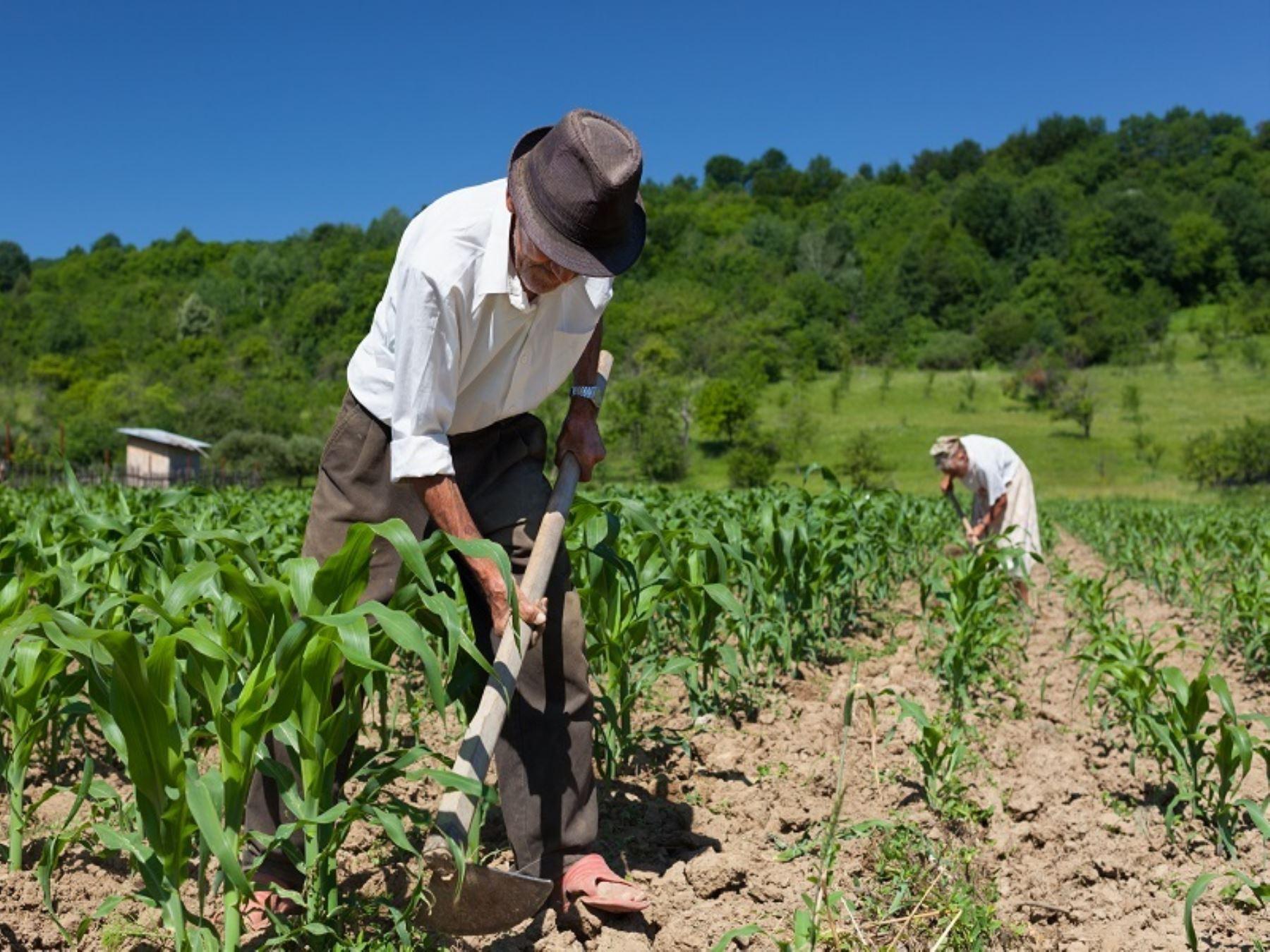 Alrededor de 280,000 agricultores de la región La Libertad, representados a través de las Juntas de Usuarios de Agua, decidieron agruparse como Asociación de Usuarios de Agua de La Libertad, alejándose de la ya conocida Junta de Nacional de Juntas de Usuarios con sede en Lima.