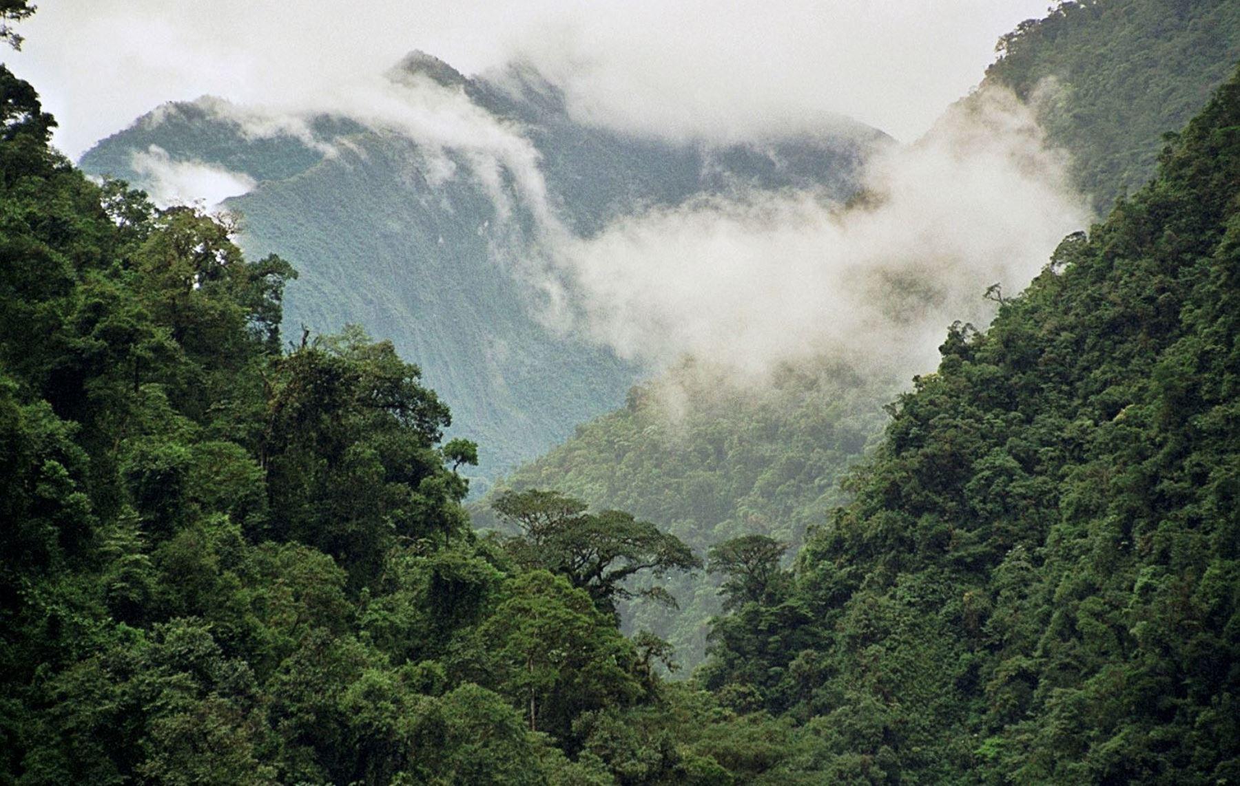 La conservación de bosques es un eje de trabajo importante del Ministerio del Ambiente. ANDINA/Difusión