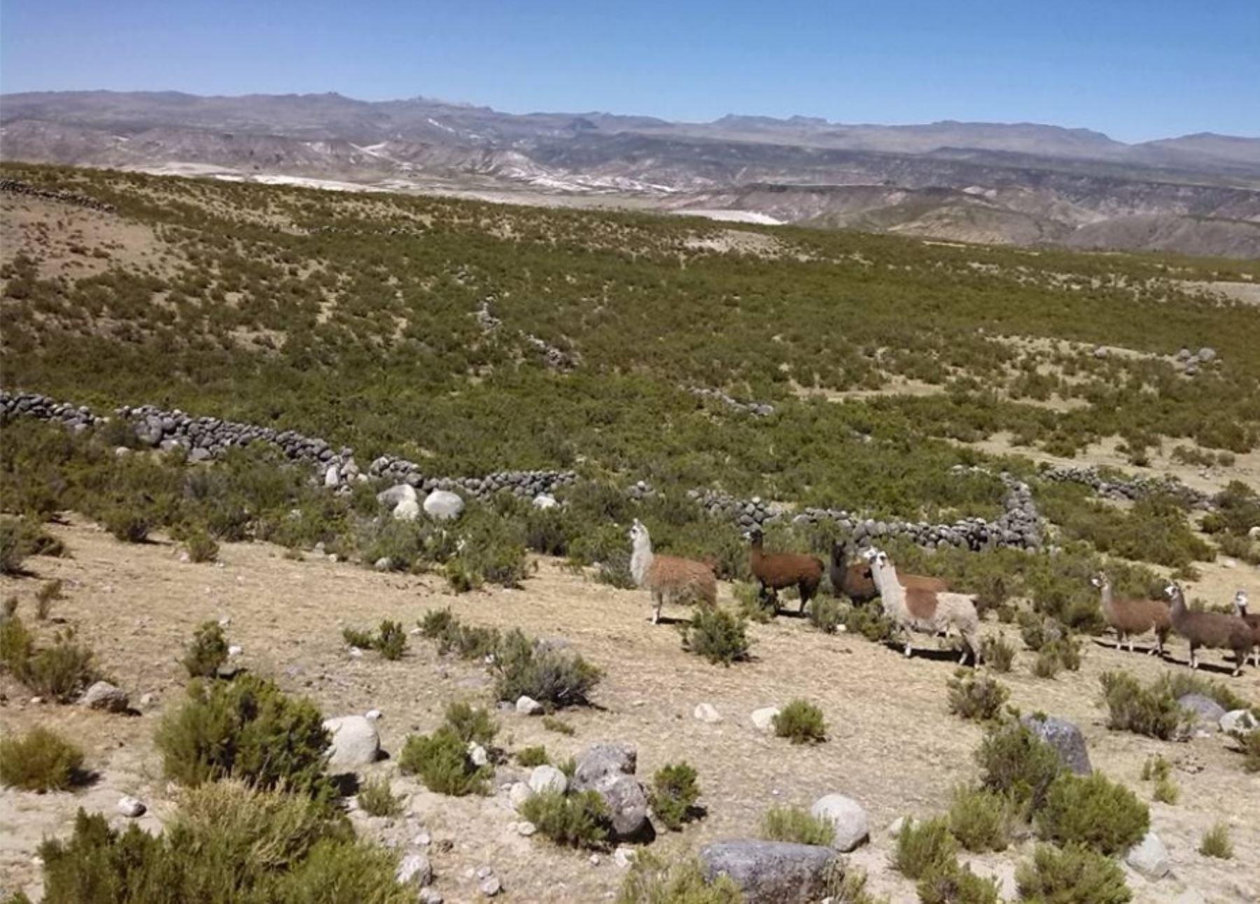Turismo y desarrollo en apur mac por la ruta del dios for Terrazas 14 vicuna