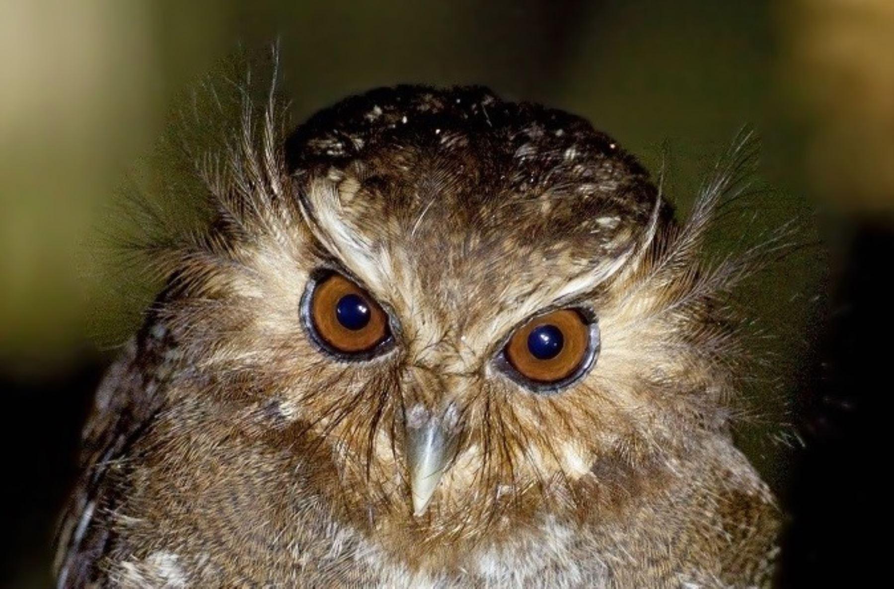 El gran potencial ecoturístico del Perú y sus extraordinarios escenarios para el avistamiento de aves quedaron evidenciados nuevamente en el Global Big Day 2017, al ocupar el segundo lugar en este certamen internacional con 1,338 especies avistadas.