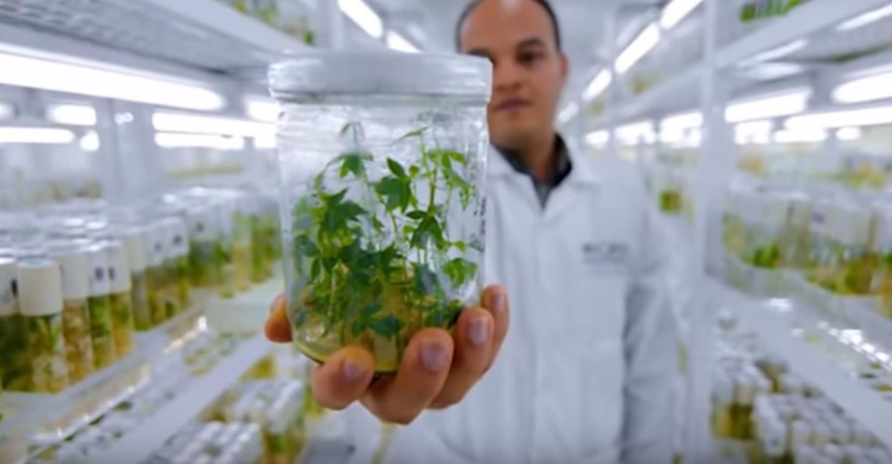 Banco de Germoplasma del Instituto Nacional de Innovación Agraria (INIA)