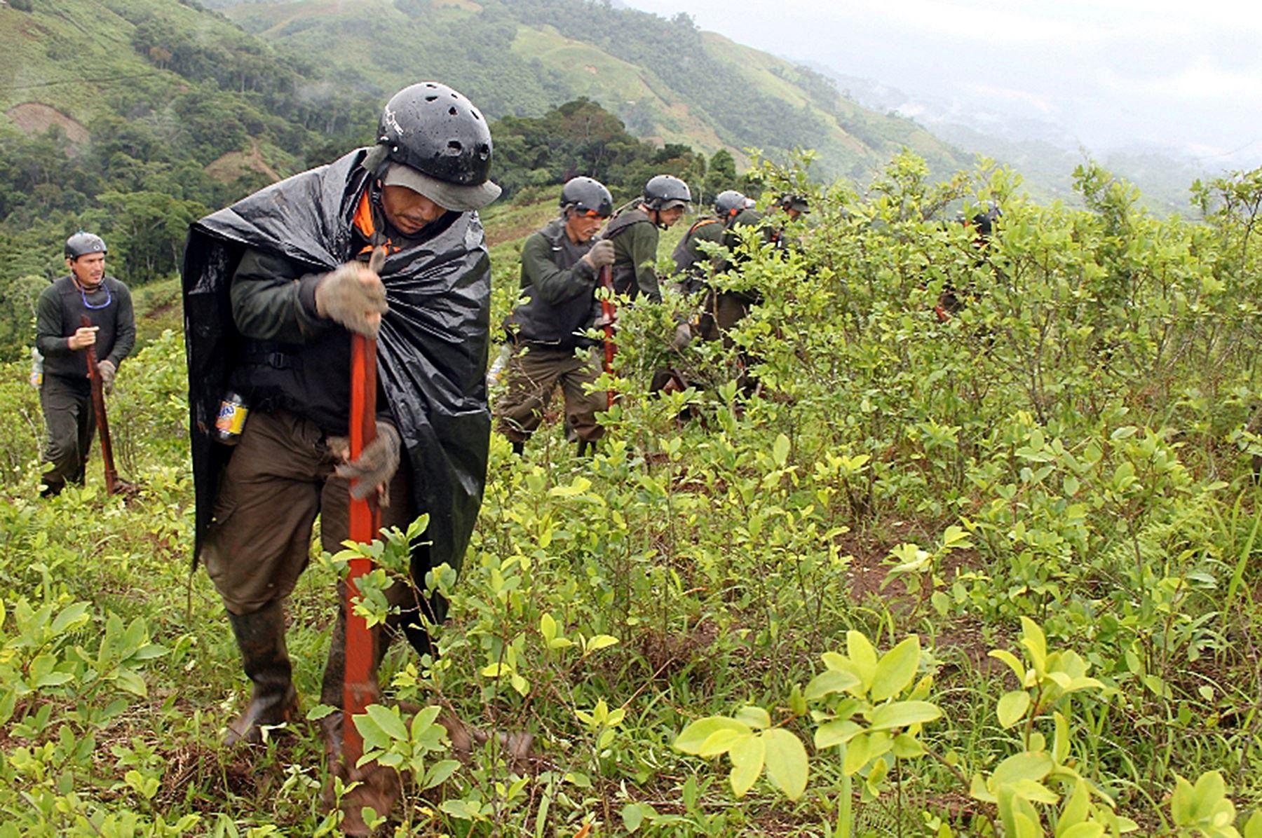 Corah erradica 9,000 hectáreas de coca ilegal en Ucayali y Huánuco durante últimos tres meses. ANDINA/Difusión