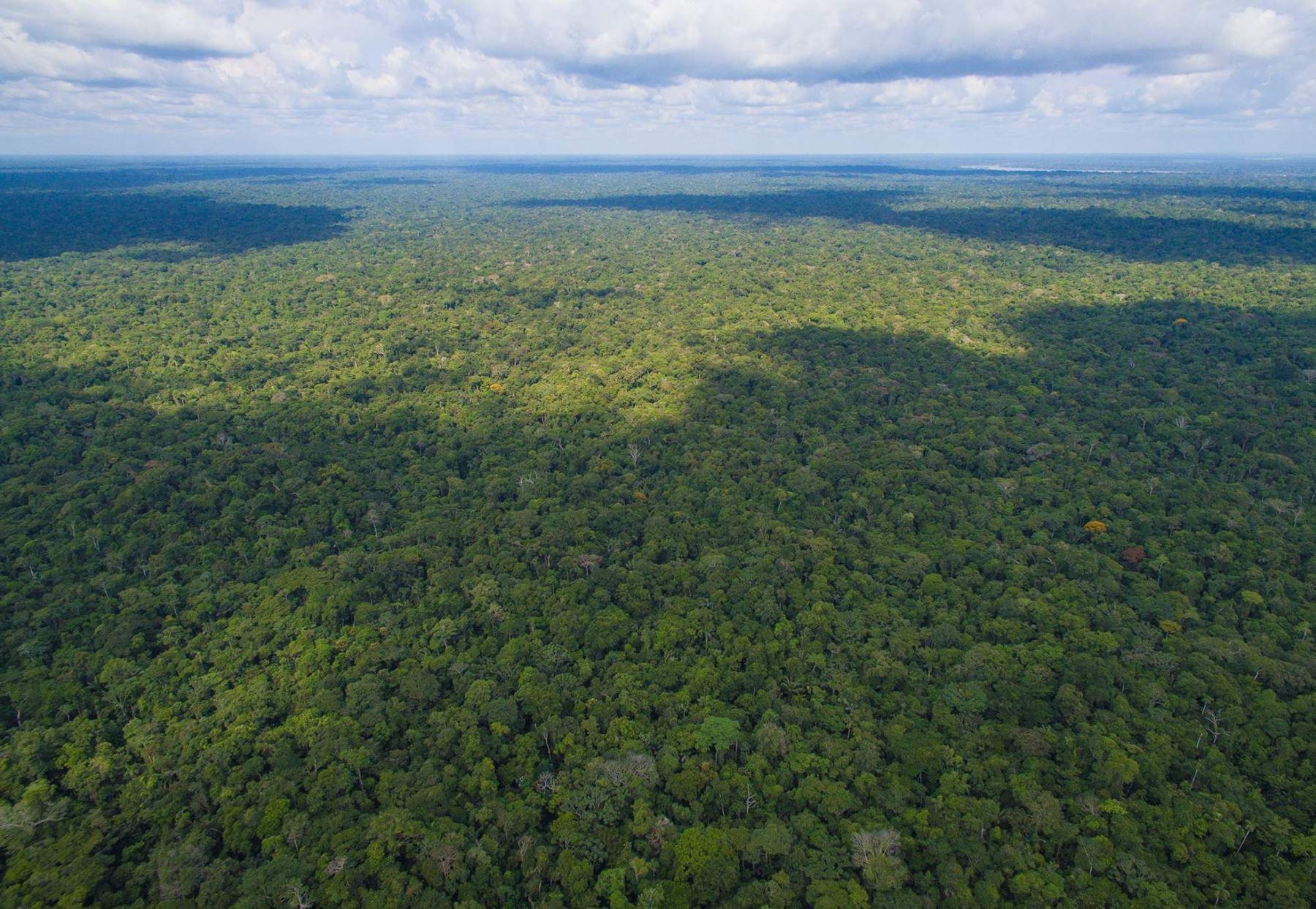 Perú registró 68 millones 733,265 hectáreas de bosques húmedos amazónicos al 2016. ANDINA/Difusión