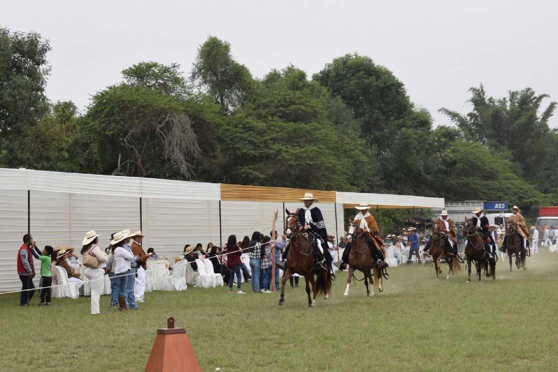 Resultado de imagen para Huaral en busca de ser líder en concursos de caballos de paso