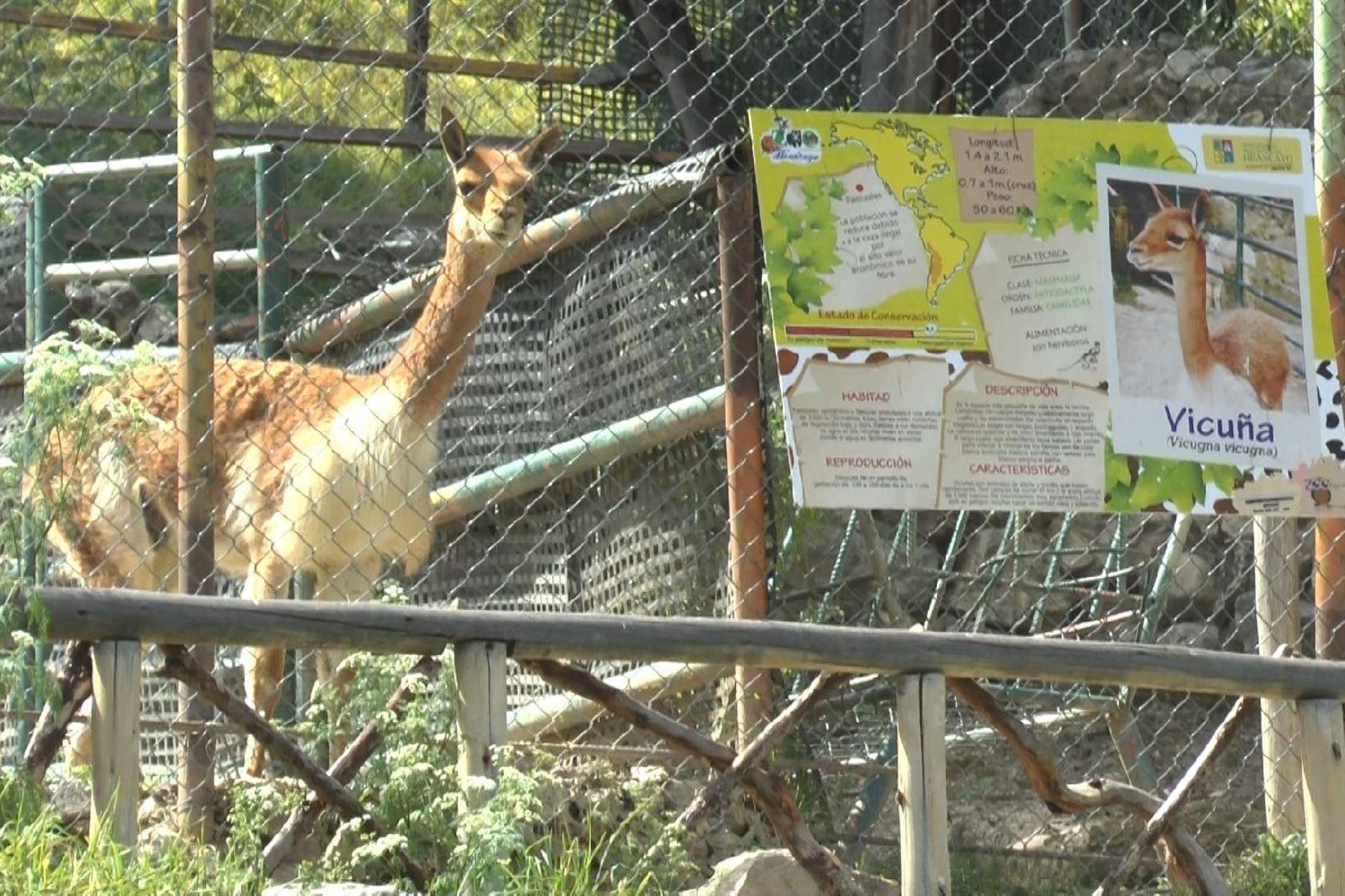 Policía investiga la muerte de vicuña de zoológico municipal de Huancayo. ANDINA/Pedro Tinoco