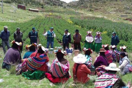Agricultura peruana. ANDINA/Difusión