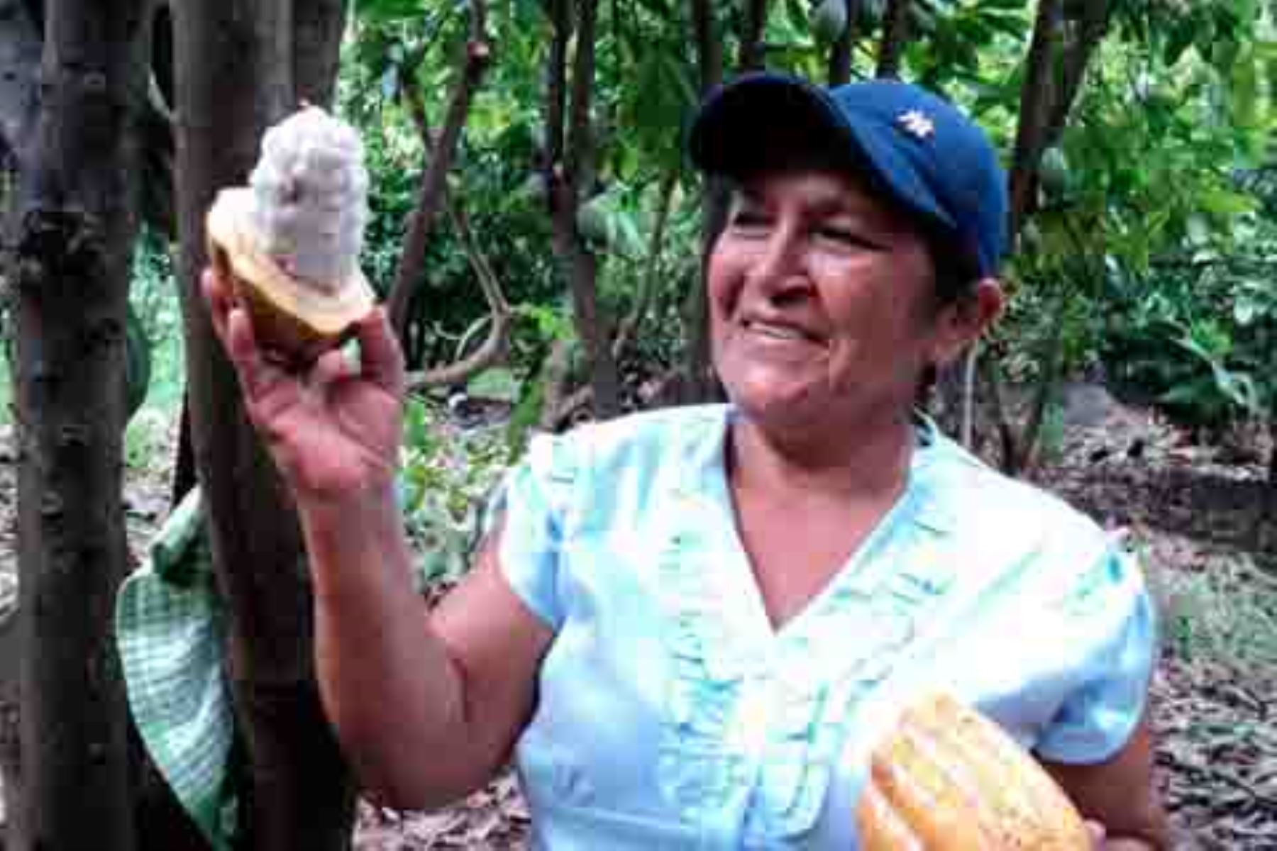 La apuesta por la producción de café y cacao orgánicos, así como de panela, con altos estándares de calidad y comercio justo están permitiendo el ingreso y posicionamiento de estos productos en el exigente y competitivo mercado mundial, así como la mejora en las condiciones de vida de 7,000 productores en 6 regiones del Perú.