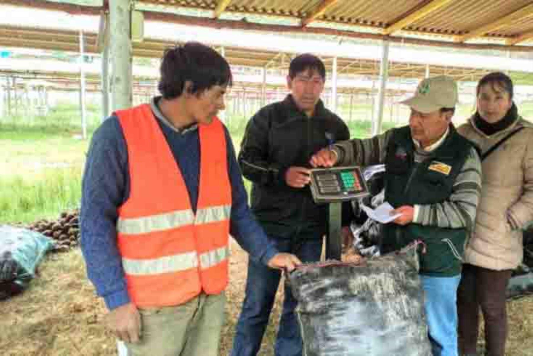 Como parte de los acuerdos suscritos por el Ministerio de Agricultura y Riego (Minagri) y las principales organizaciones de productores de la región, hoy se inició la adquisición de las primeras 1,500 toneladas de papa blanca a un precio de un sol el kilogramo.