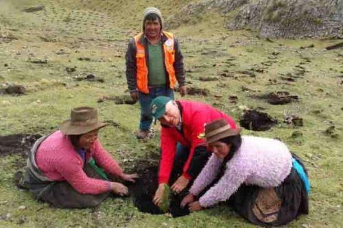 Con ambiente de fiesta a 3,800 metros de altura y durante 10 días, cerca de un centenar de comuneros de Pumarranra, del distrito de Pucará, provincia de Acobamba, región Huancavelica, culminaron el sembrado de 12,000 plantones de pino, de acuerdo a un convenio firmado con el Ministerio de Agricultura y Riego (Minagri) a través de Agro Rural.