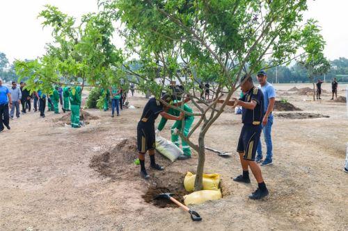 Un nuevo bosque para San Borja. Foto: Andina/Difusión