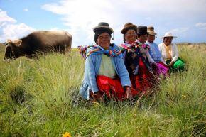 Pequeños ganaderos de la región Puno.