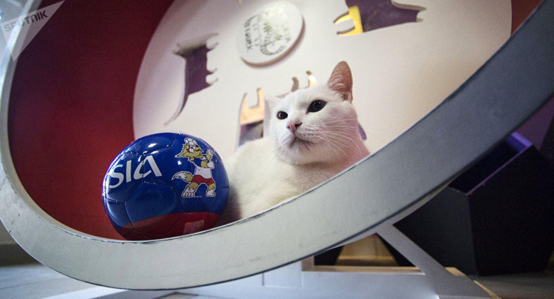 El gato Aquiles. Foto: Internet/Medios.