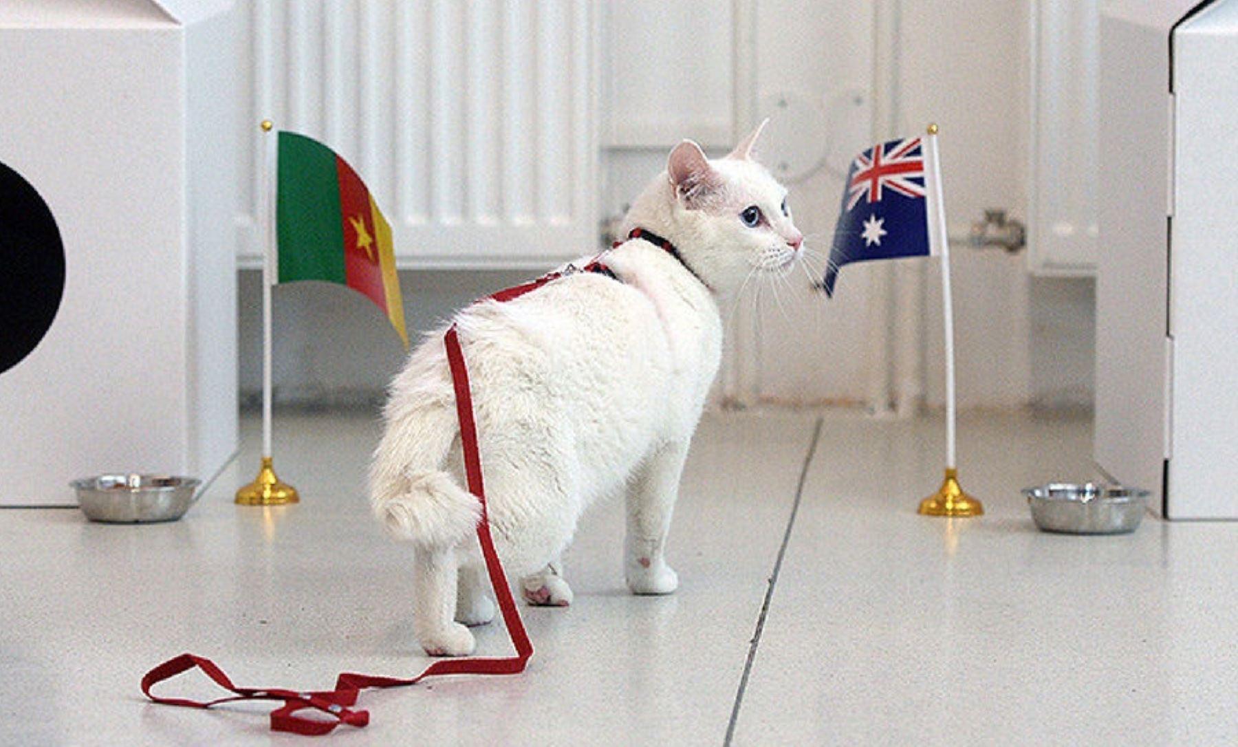 El gato Aquiles. Foto: AFP.