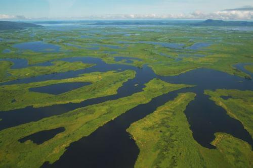 El Pantanal es el humedal más grande del planeta ubicado y es hogar de más de 4,000 especies de plantas y animales