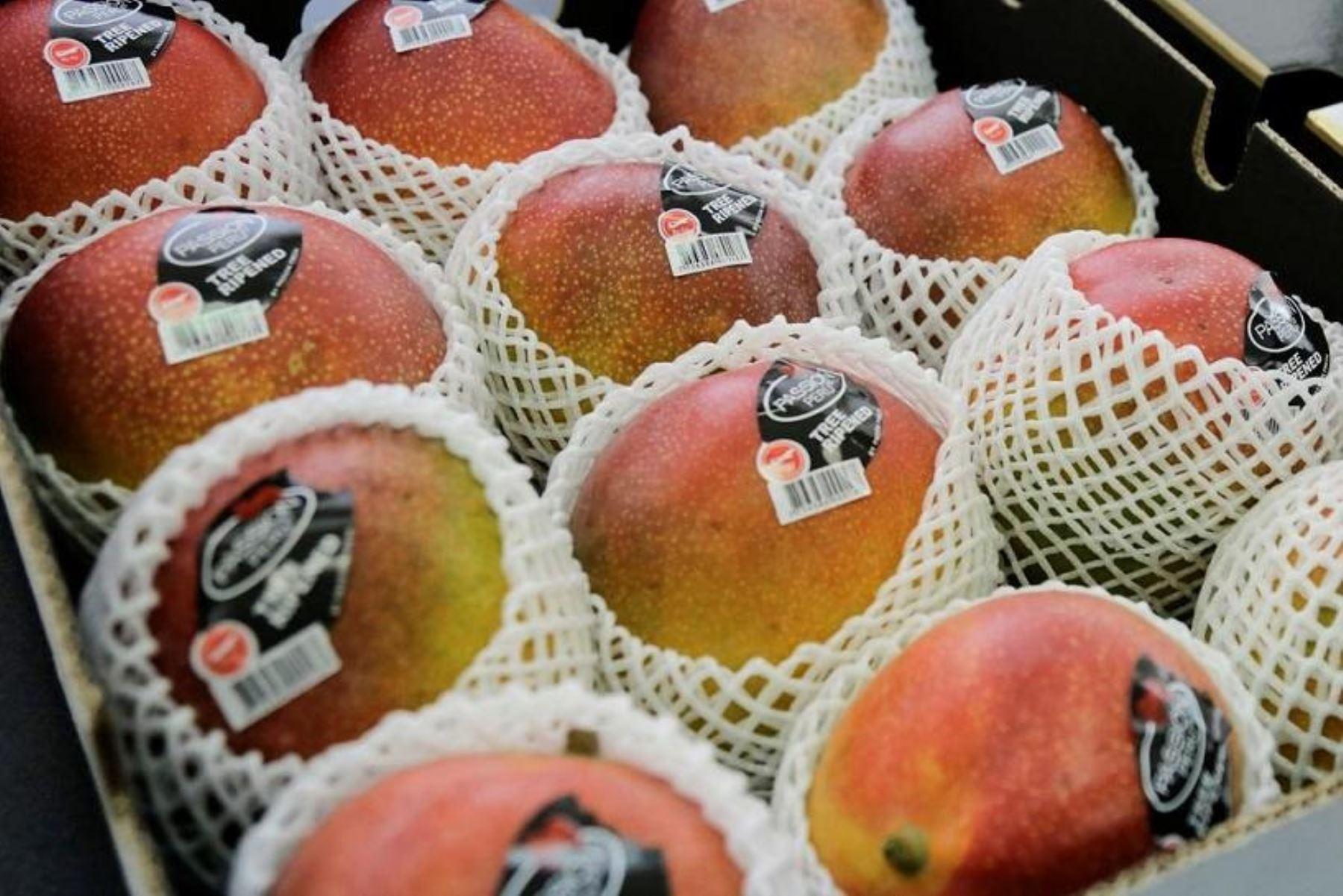 Mango de Casma para exportación. Foto: Cortesía Mincetur.