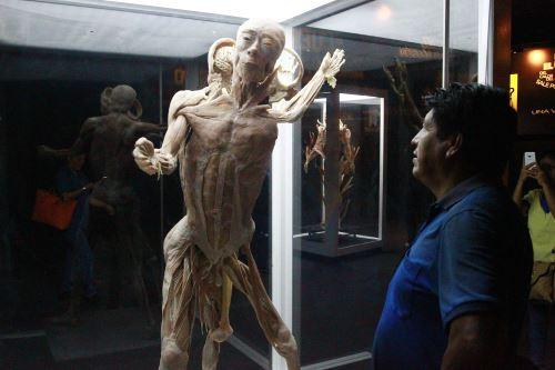 """Muestra """"Bodies, cuerpos humanos reales"""""""