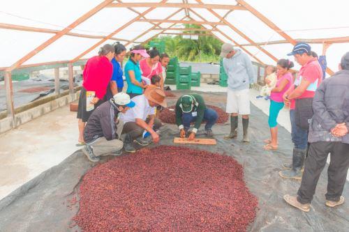 Más familias de San Martín se suman a programa de desarrollo alternativo. ANDINA/Difusión