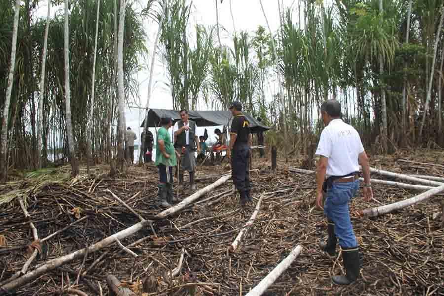 Detectan 800 trazas de madera por tala ilegal en Ucayali