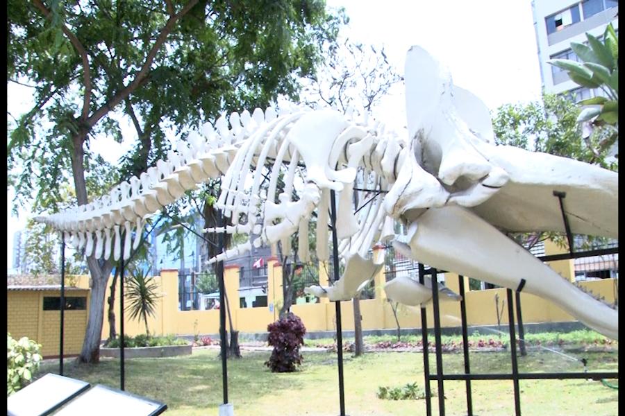 Museo de Historia Natural cumple 100 años custodiando biodiversidad del Perú