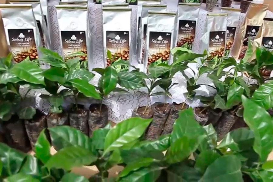 Minagri: presentan a productores que participarán en Feria Mundial del Café