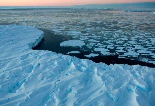 Científicos investigarán impacto del retroceso glaciar en biodiversidad de la Antártida.