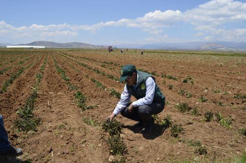La falta de lluvias amenaza con afectar la actividad agrícola de diversas zonas de Piura.