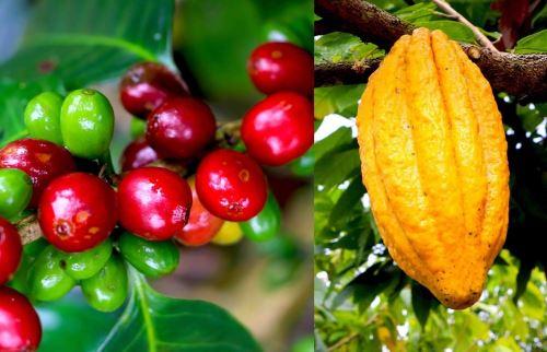 El café y cacao figuran entre los productos que se priorizarán.