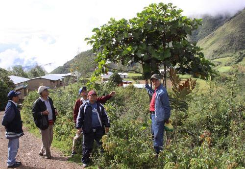 La quina fue declarada Patrimonio Natural del Perú en el 2008 por el Congreso de la República.