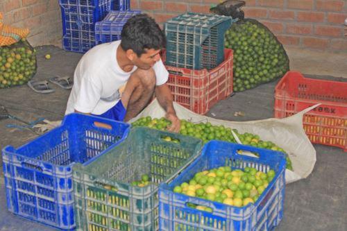 El limón de Piura es uno de los productos exportables de esta región.