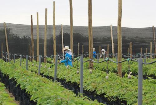 El crecimiento de la actividad agroindustrial ha impulsado la demanda de hospedajes.