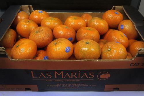 INIA ejecuta un proyecto de investigación de la mandarina.