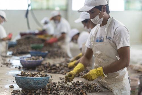 El Perú posee un gran potencial para el desarrollo de la acuicultura de moluscos.