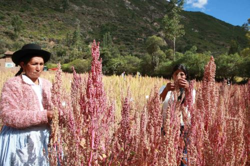 La quinua es uno de los productos con mayor potencial por sus propiedades nutricionales.