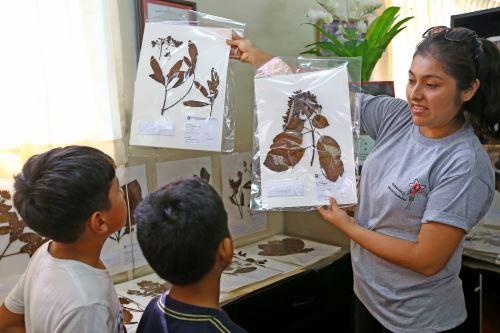 El Museo de Historia Natural enseña la importancia de la quina.